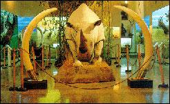Museo de Caza Benito Albarrán
