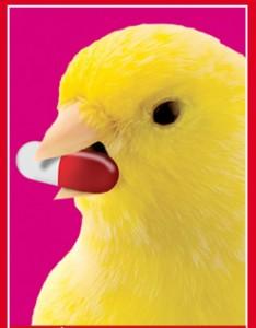El buen canario